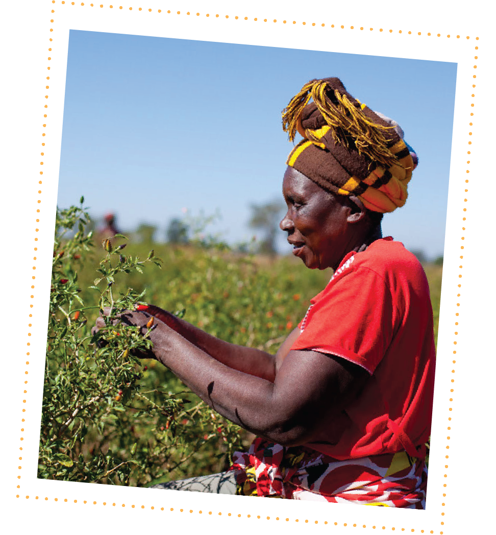 ACDI/VOCA works with women piri-piri farmers in Mozambique thanks to funding from BHP Billiton Sustainable Communities