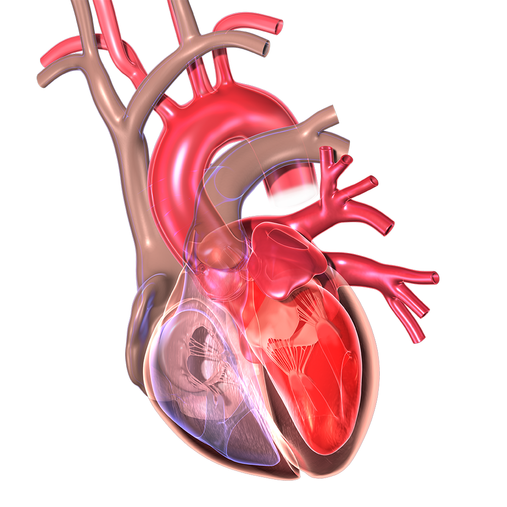 Love Your Heart Preventing Heart Attack Cardiac Arrest Health