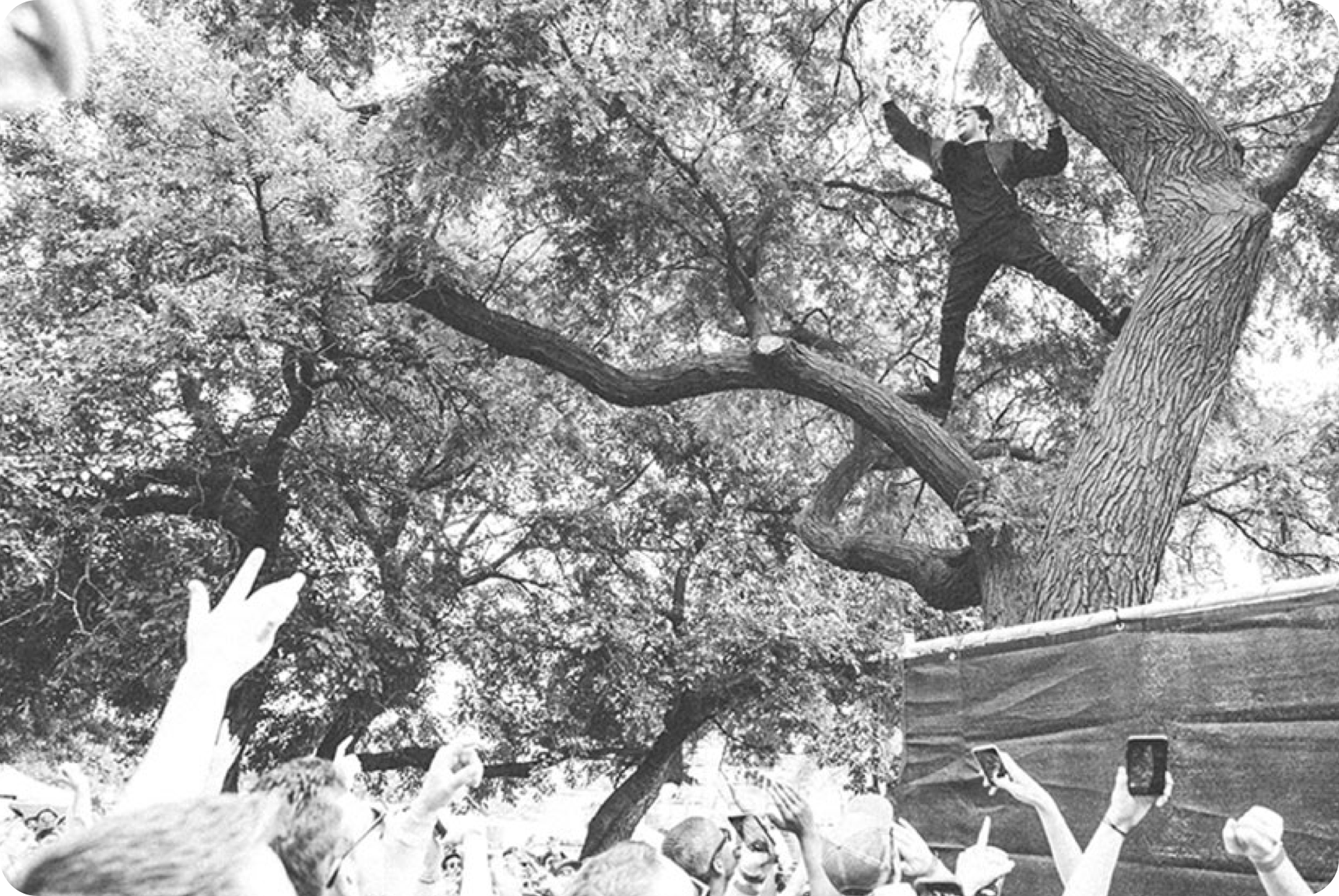 Upward view of a man standing in a tree while looking upon a crowd