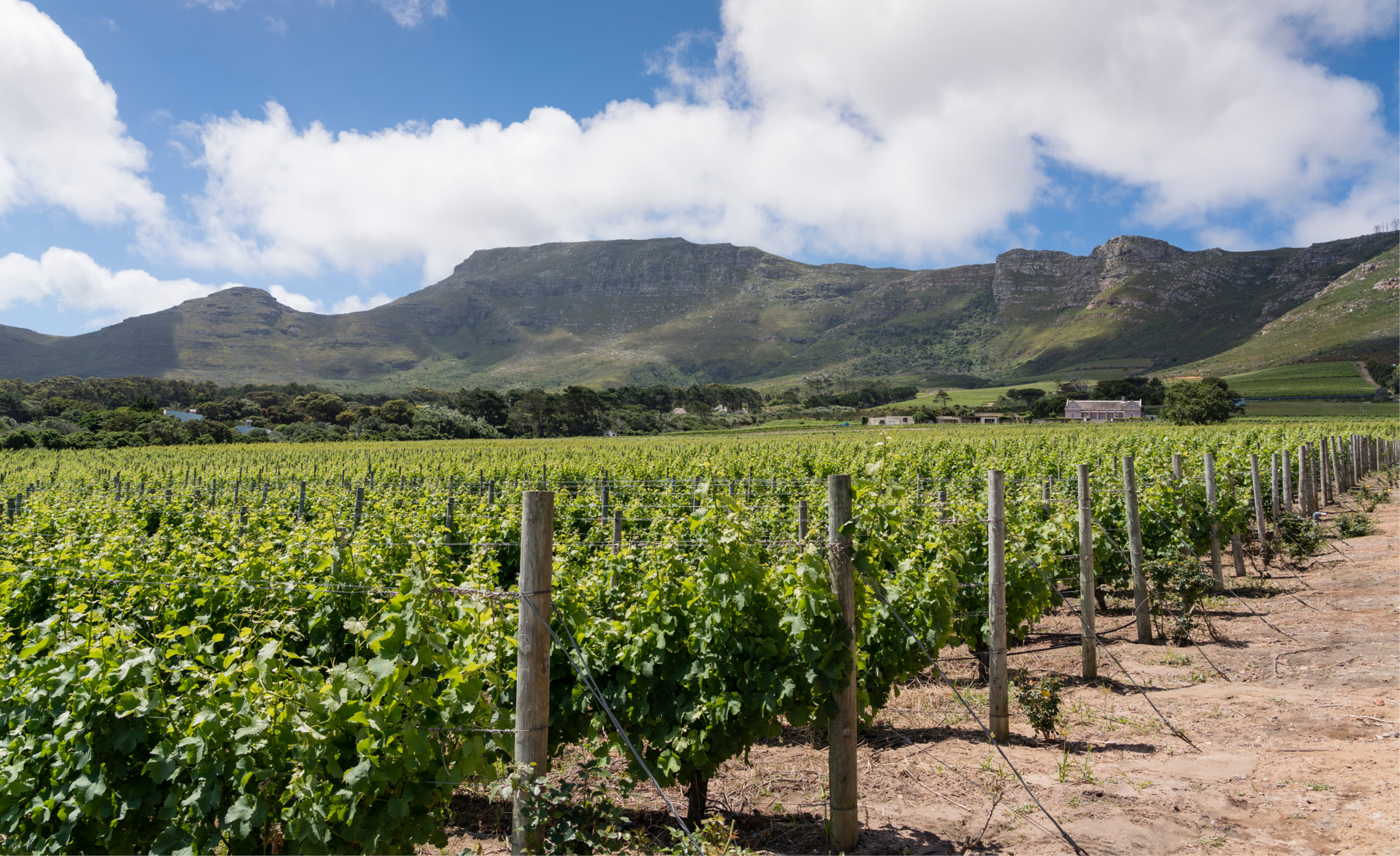 cape town vineyard wine