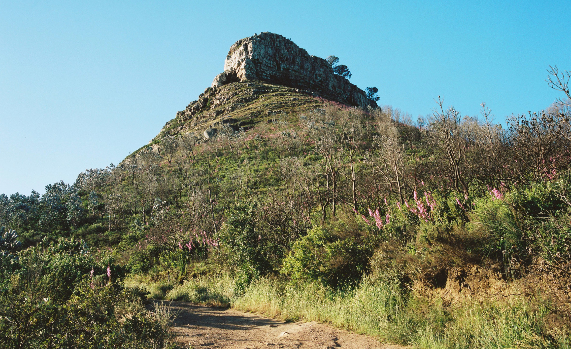 cape town mountain attraction hiking