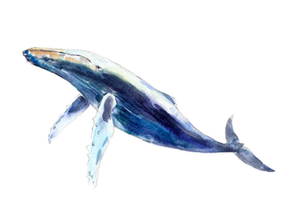 blue-whale.png?imageOpt=1&fit=bounds&width=325