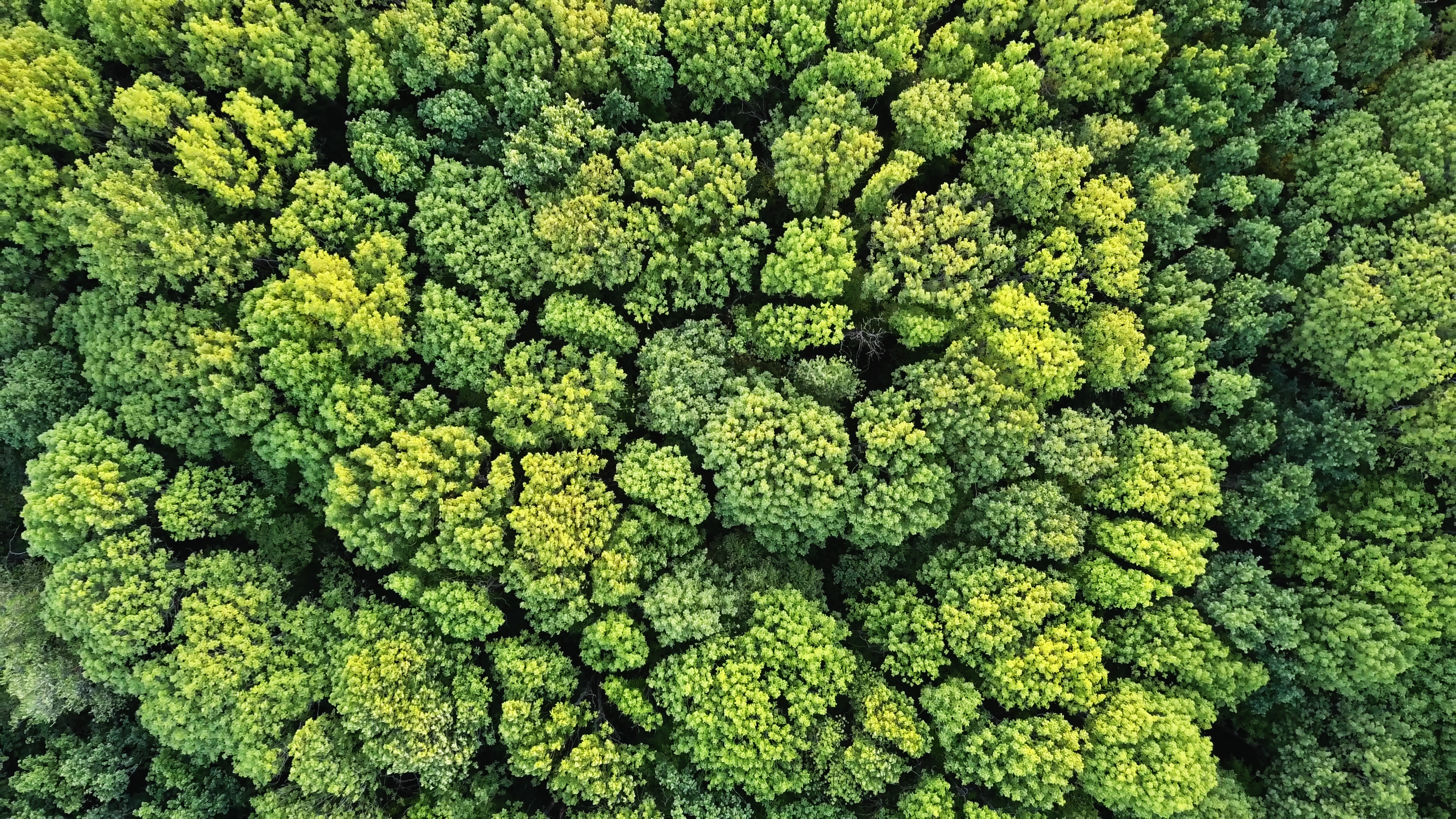 Beautiful vibrant background consisting of trees of the forest. Texture of forest view from above.