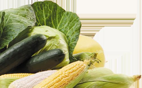 corn, squash, cabbage, melon