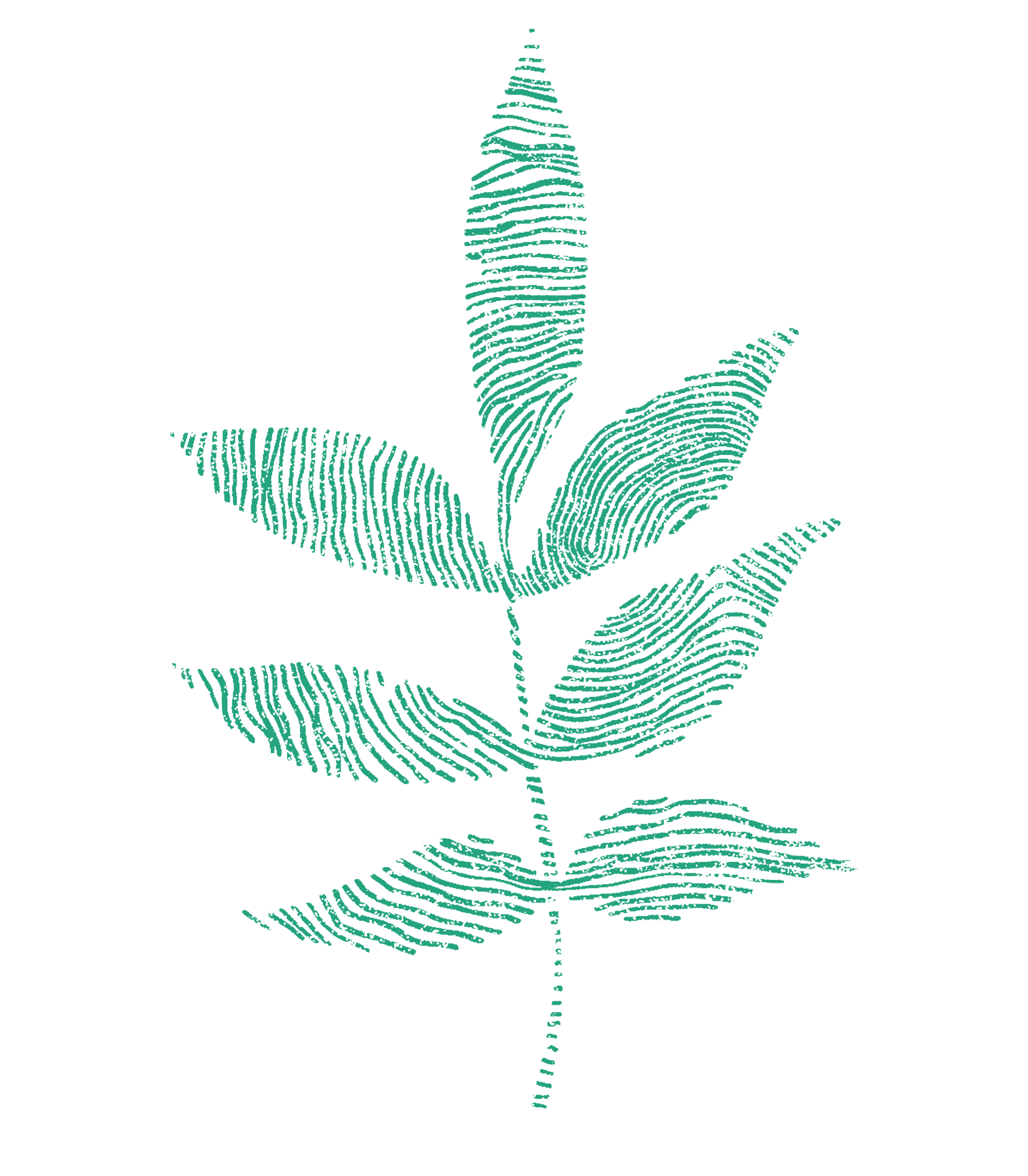 Decorative plant illustration