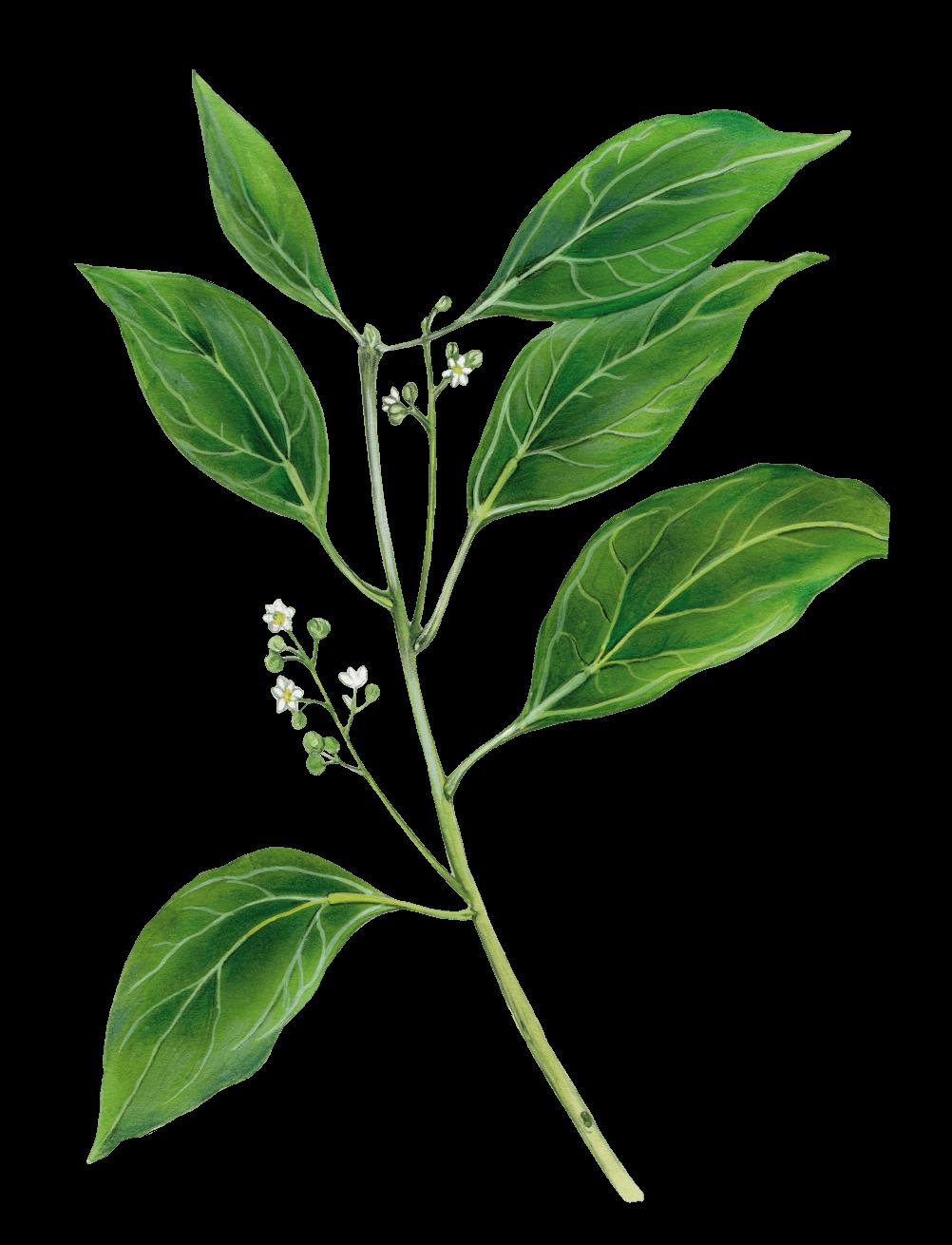 Decorative plant image