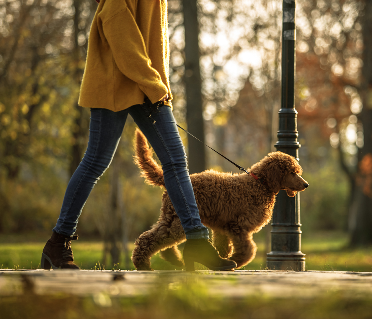 Woman walking with poodle in a park