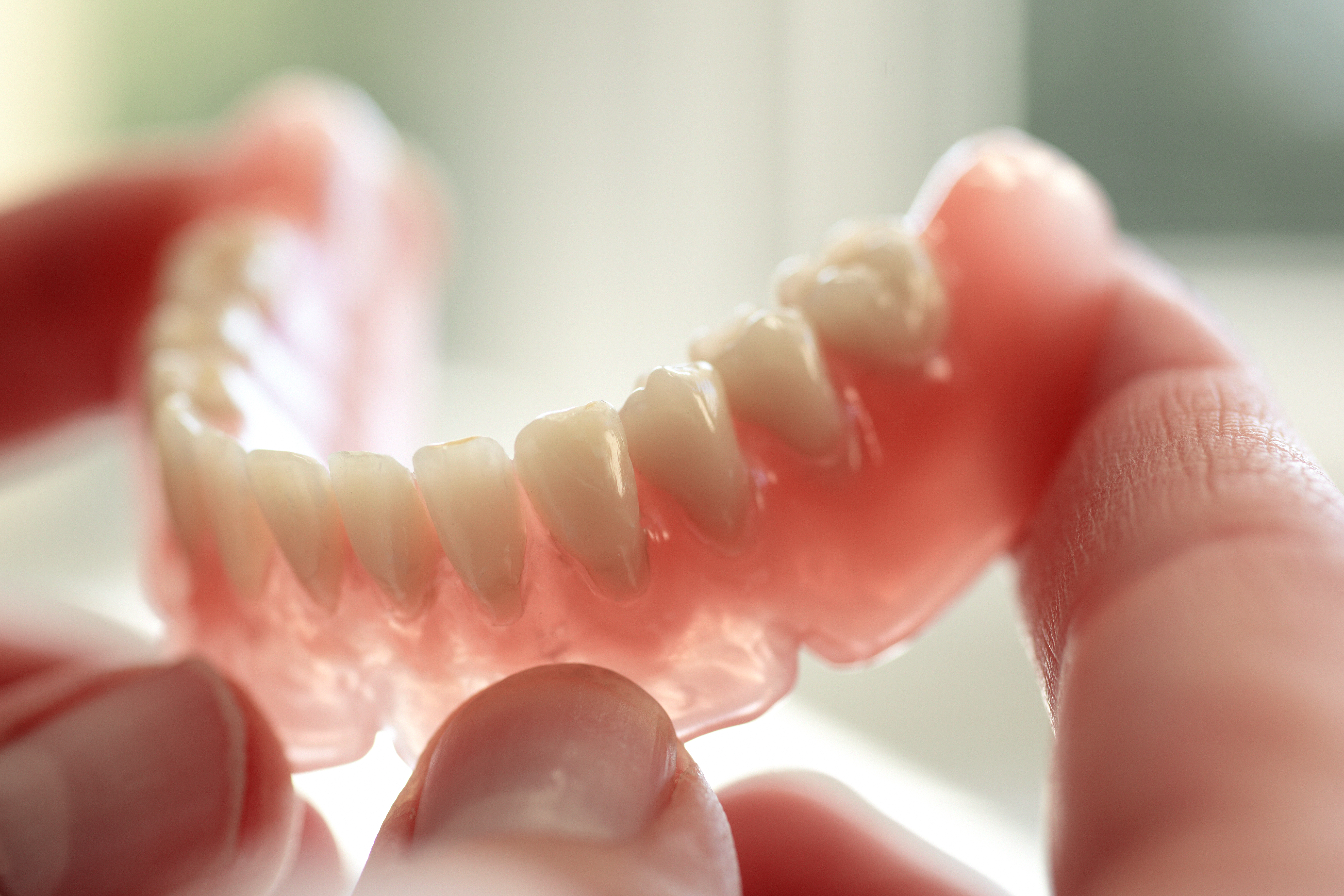Close up photo of lower denture section in hands